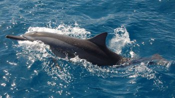 Dolphin-Watching Full-Day Cruise