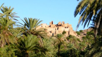 Taroudant Half-Day Tour with Brunch in Soussi Farm