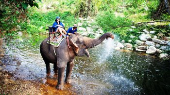 Khao Yai National Park Full Day Tour
