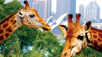 Taronga Zoo Ticket with Hop-On Hop-Off Explorer Cruise