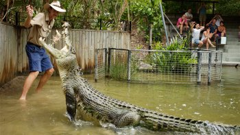 Hartley's Crocodile Adventures Half-Day Tour