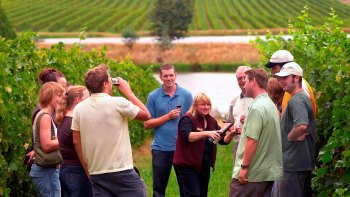 Yarra Valley Small-Group Wine Tour from Melbourne