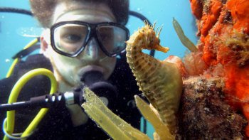 Discover Scuba Diving with Sea Dragons