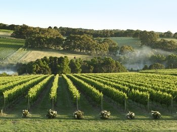 Mornington Peninsula Coastal Wine, Cheese and Cider Tour