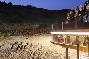 Phillip Island Wildlife & Penguin Parade Small Group Tour