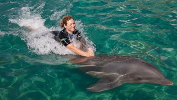 Miami Seaquarium Dolphin Interaction Programs