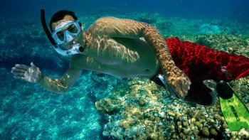 Guided Snorkel Adventure of Coral Reef