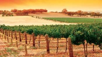 Grand Barossa Valley Day Tour from Adelaide