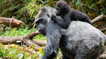 ,Woodland Park Zoo