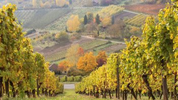 Upper Middle Rhine Valley Full-Day Tour with Winetasting & Lunch