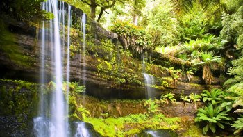 Mount Field, Russell Falls & Salmon Ponds Tour from Hobart