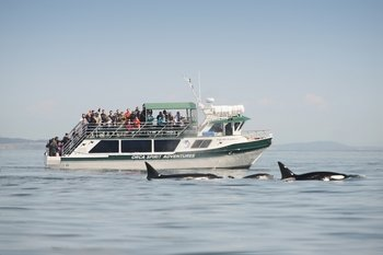 Whale Watching Tour via High-Speed Ocean Cruiser or Zodiac Boat