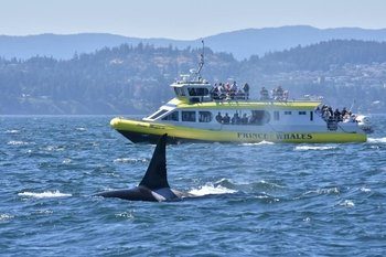 Victoria Ocean Magic II Whale Watching Adventure