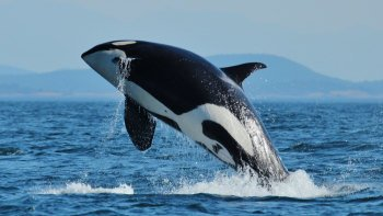 Whale-Watching & Marine Wildlife Tour
