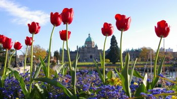 Victoria City Tour & Admission to Butchart Gardens