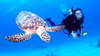 Half-Day Bahamas Scuba Diving Excursions