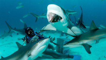 Shark Dive Adventure