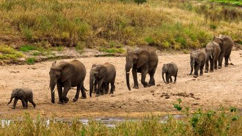Tarangire National Park Full-Day Tour with Lunch