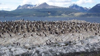 Beagle Channel Catamaran Ride to Penguin Island & Haberton