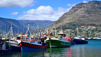 Cape Peninsula Full-Day Tour