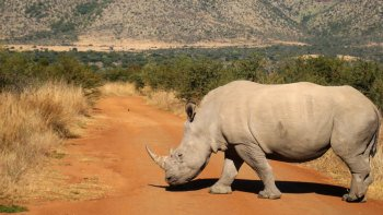 Pilanesberg Game Reserve Full-Day Tour