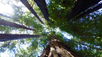Muir Woods & Sonoma Wine Country Tour