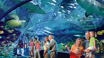 Ripley's Aquarium of the Smokies with Multiple Attraction Options