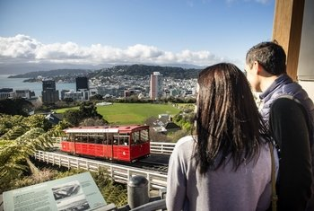 Wellington City Sights & Coastline Tour