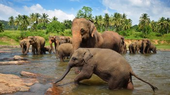 Pinnawala Elephant Orphanage Full-Day Tour with Lunch
