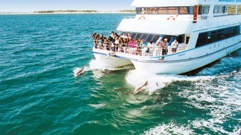Port Stephens Dolphin Watching & Sandboarding Tour