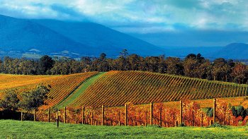 Yarra Valley Wineries & Puffing Billy Train Tour