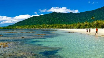 Small Group Premium Daintree & Cape Tribulation Day Tour