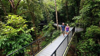 Private Tour to Daintree, Cape Tribulation & Mossman Gorge
