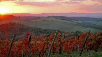 Chianti & San Gimignano Sunset Tour with Dinner from Siena
