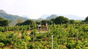 2-Day Khao Yai Wine Country Cycling Tour