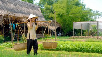 Flavours of Vietnam: Hoi An Market & Tra Que Village Cooking Class