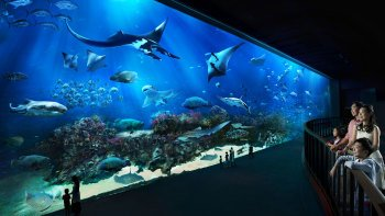 S.E.A. Aquarium™ 1-Day Pass with Hotel Pick-Up