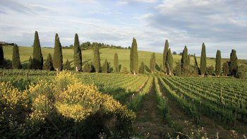 Tuscany in 1 Day with Lunch & Dinner