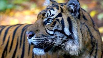 Tickets, museos, atracciones,Entradas a atracciones principales,Zoo de Melbourne