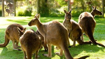 Healesville Sanctuary Admission