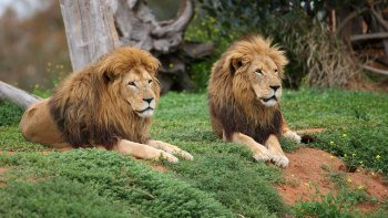 Werribee Open Range Zoo Admission