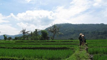 Private Experiences of the Bali Countryside Full-Day Tour