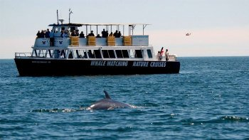 Nature & Whale-Watching Boat Tour