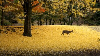Private Full-Day Kyoto & Nara Tour with Nara Park Entry
