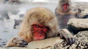 Private 3-Day Snow Monkeys Tour