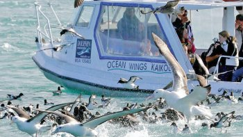 Full-Day Albatross Tour in Kaikoura