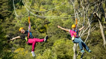 Wining, Dining & Zipling Tour on Waiheke Island