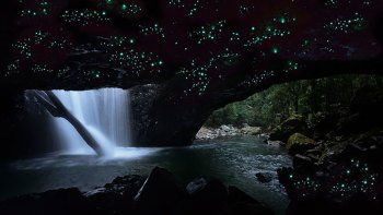 Springbrook National Park & Glowworm Night Tour