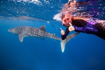Exmouth Swim with Whale Sharks Tour