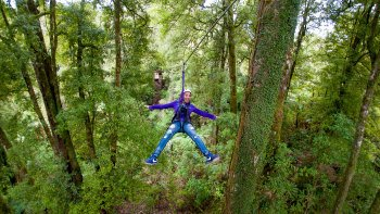 Native Forest Canopy Tour